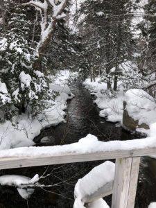 Black's Brook Trail